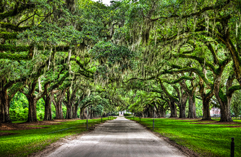 Plantations for sale in South Carolina